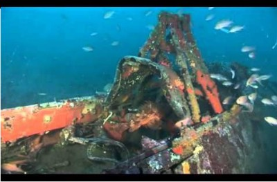 Epave-vie-sous-marine-mer-habitat