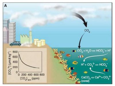 acidification des oceans co2 active